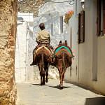 Lindos donkeys